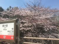 今年が最後!? 四ツ谷駅の隠れ花見スポットが消滅か